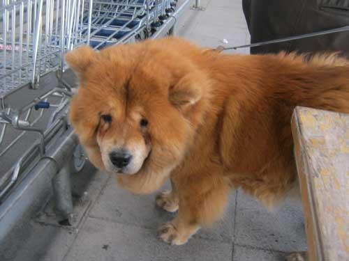 سگ در ازمیر ترکیه