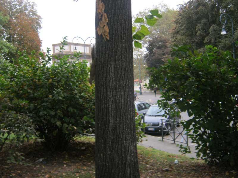سنجابهایی که روی درختان بلوط کنار رودخانه پو تورین هستند
